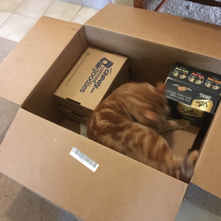 Scooby cat in box