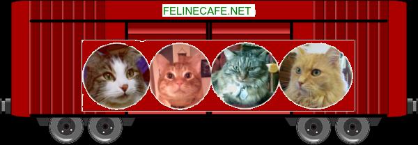 felinecafe blessing train boxcar