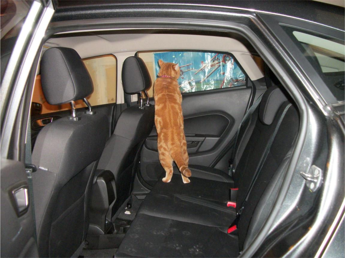 Scooby in car backseat