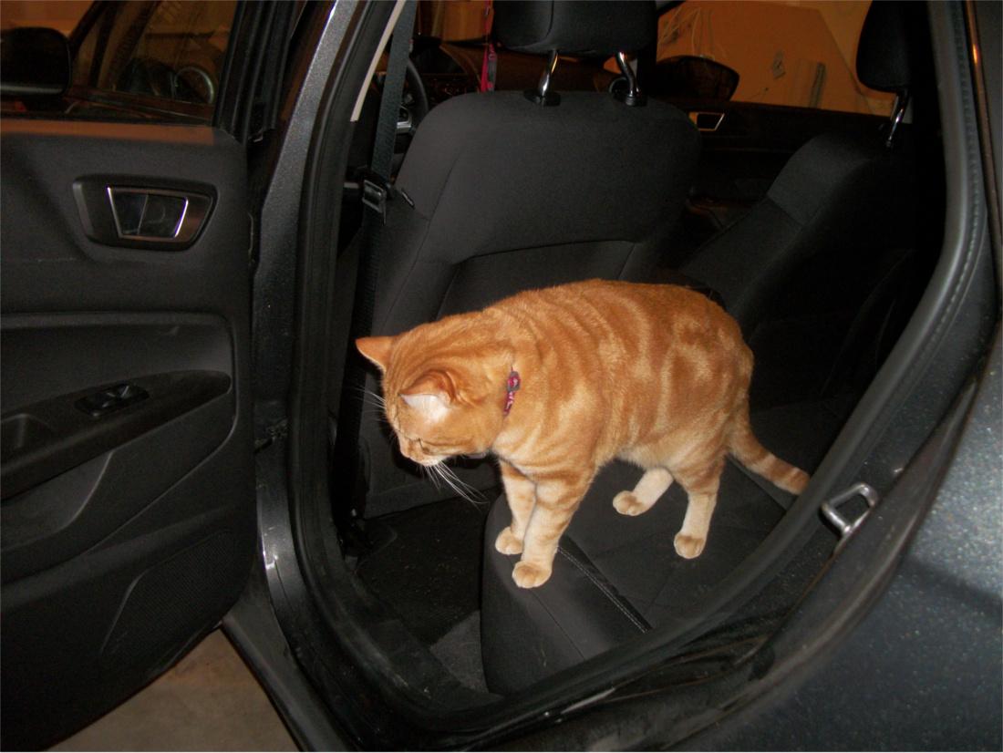 Scooby in backseat