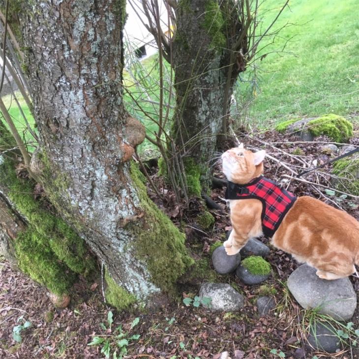 Scooby tree