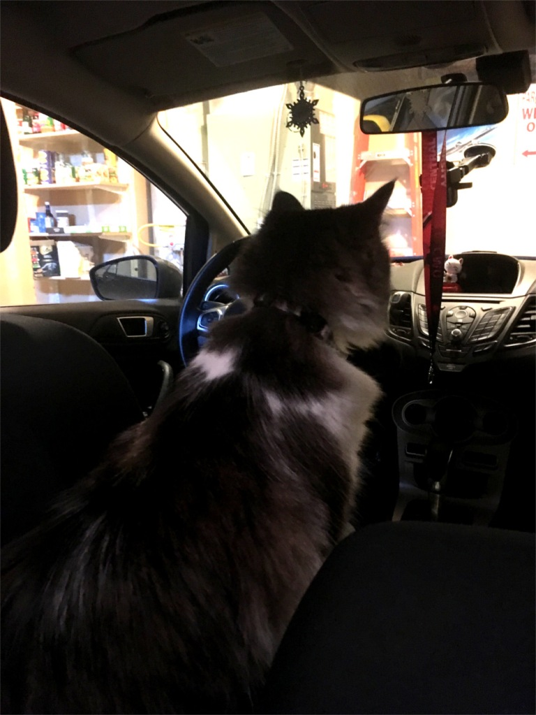 zeke in front seat of car