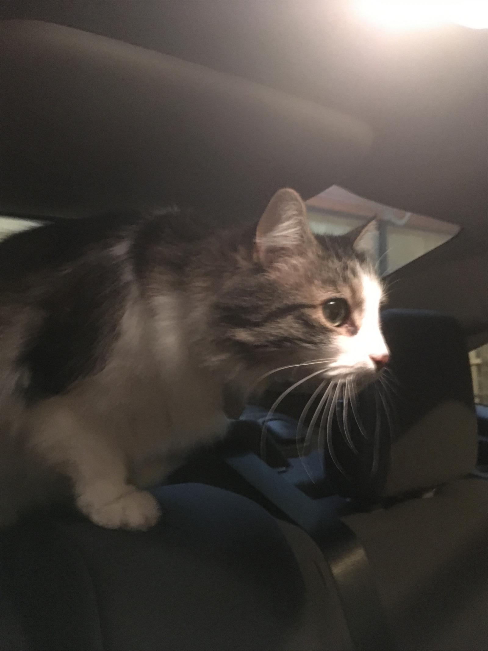 Zeke cat car