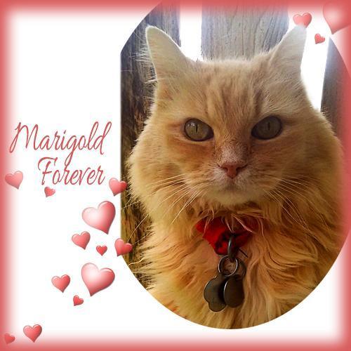 Marigold Forever card