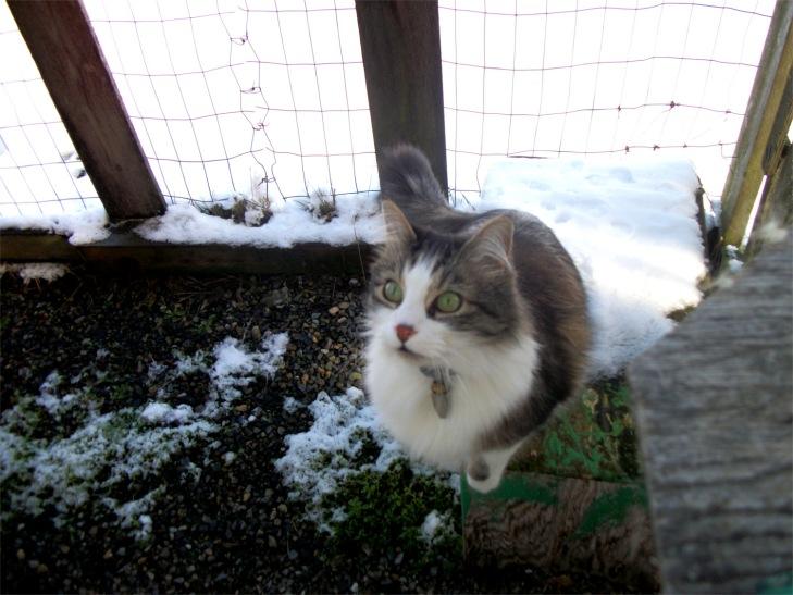 Zeke cat