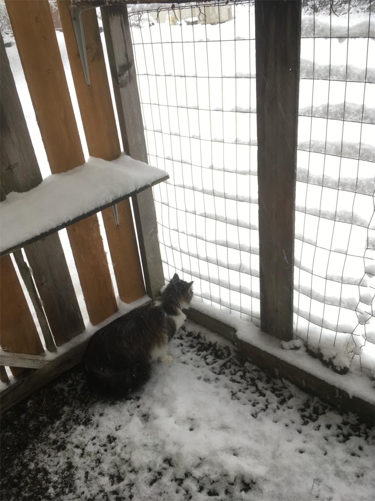 zeke snow catio