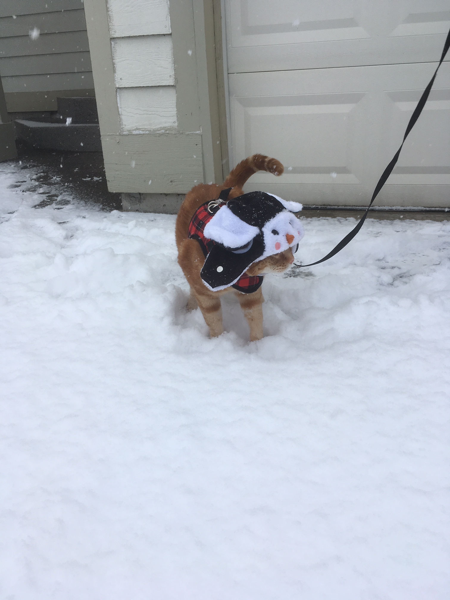 Scooby snow