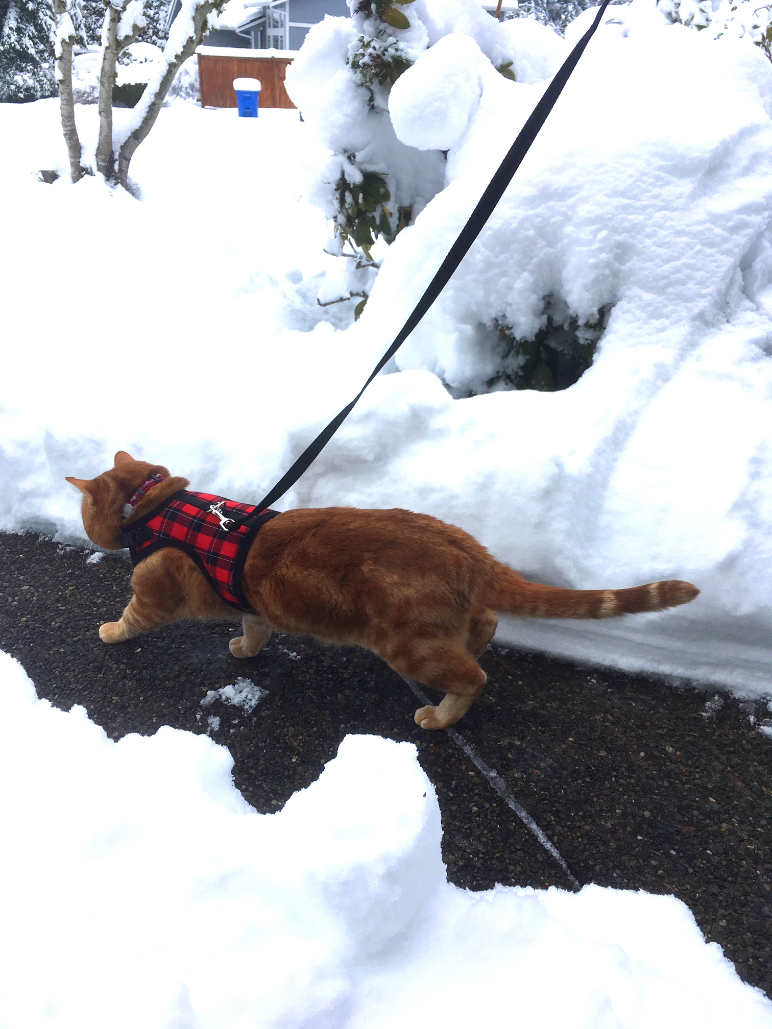 Scooby walking down path in snow