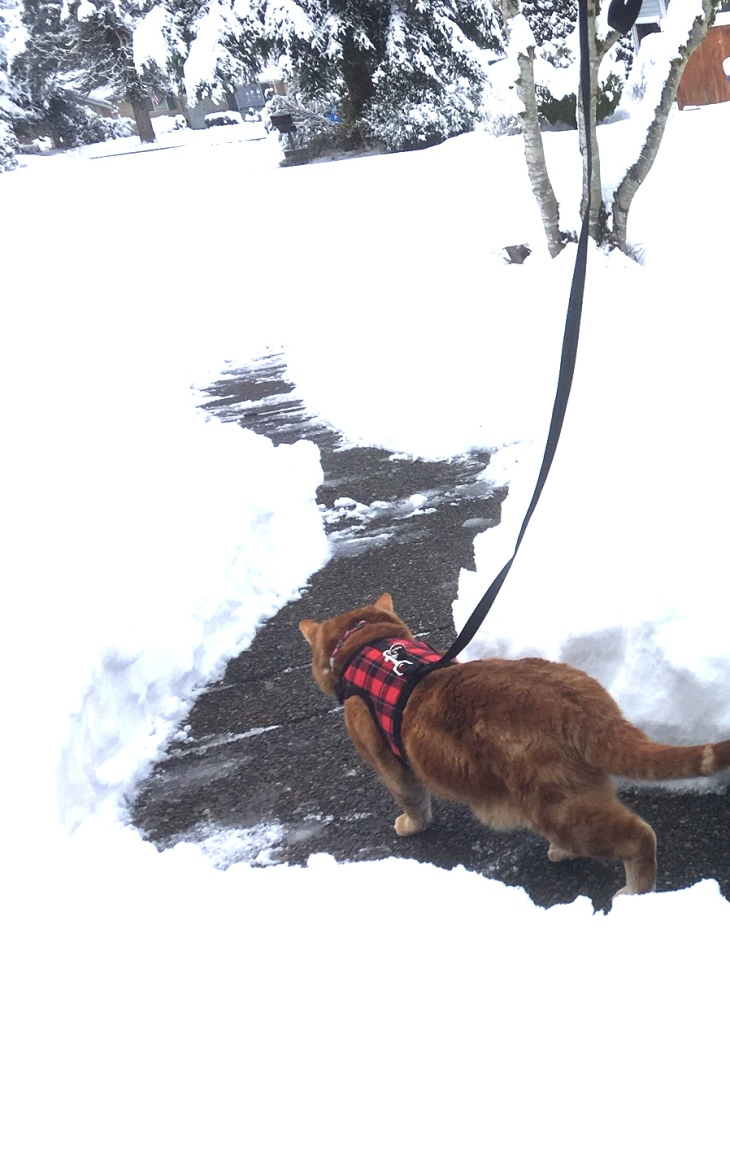 Scooby on path thru snow