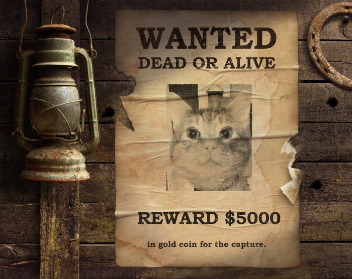 Scooby cat wanted poster