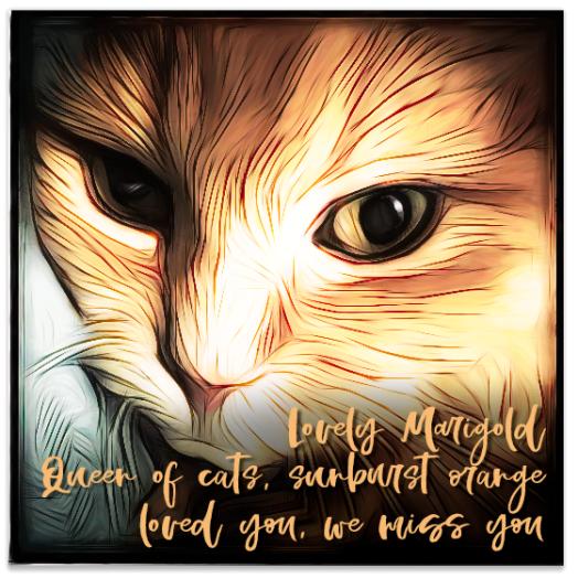 Marigold haiku