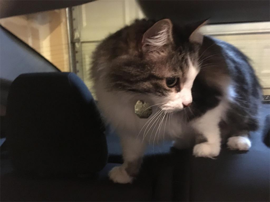 Opie in car