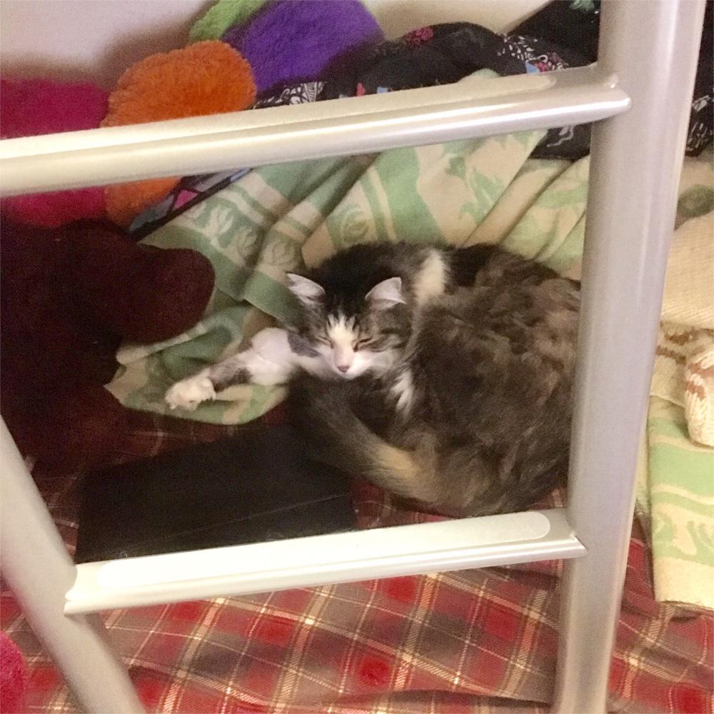 Zeke in lower bunk