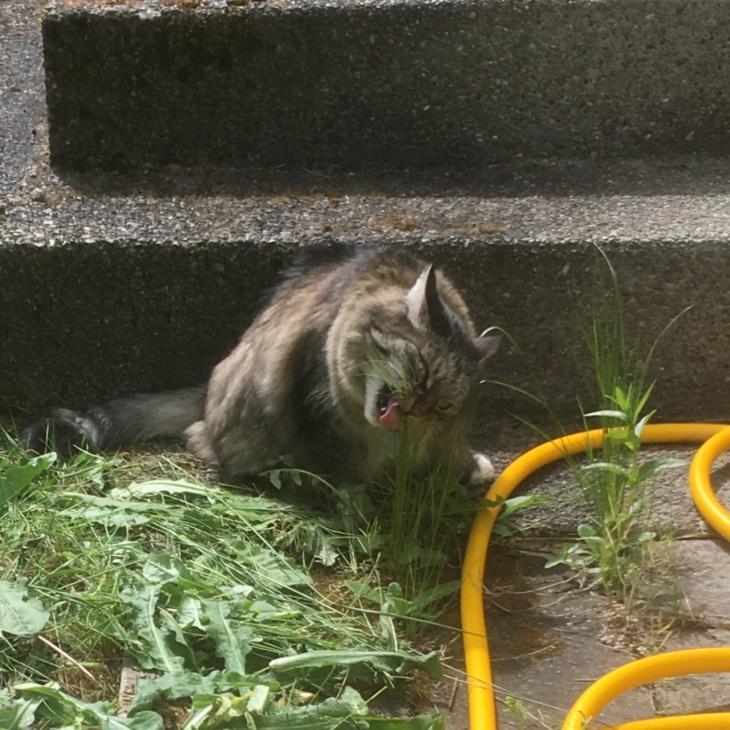 Opie grass