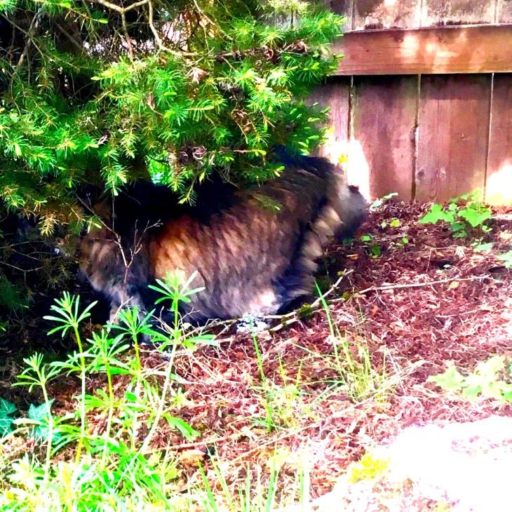 Opie under a bush