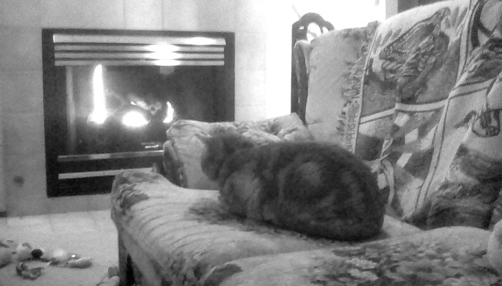scooby cat fireplace