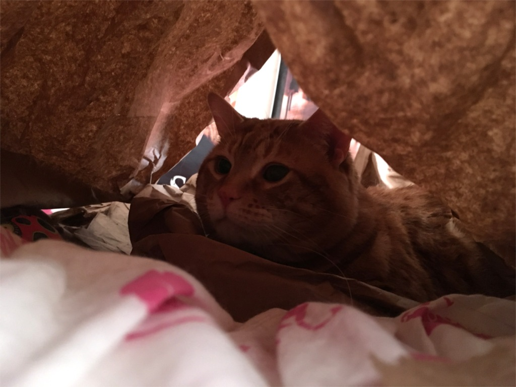 Scooby in paper tent
