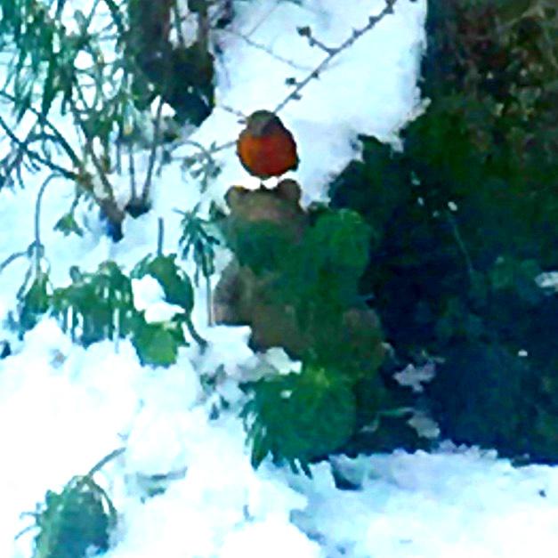 Bird snow