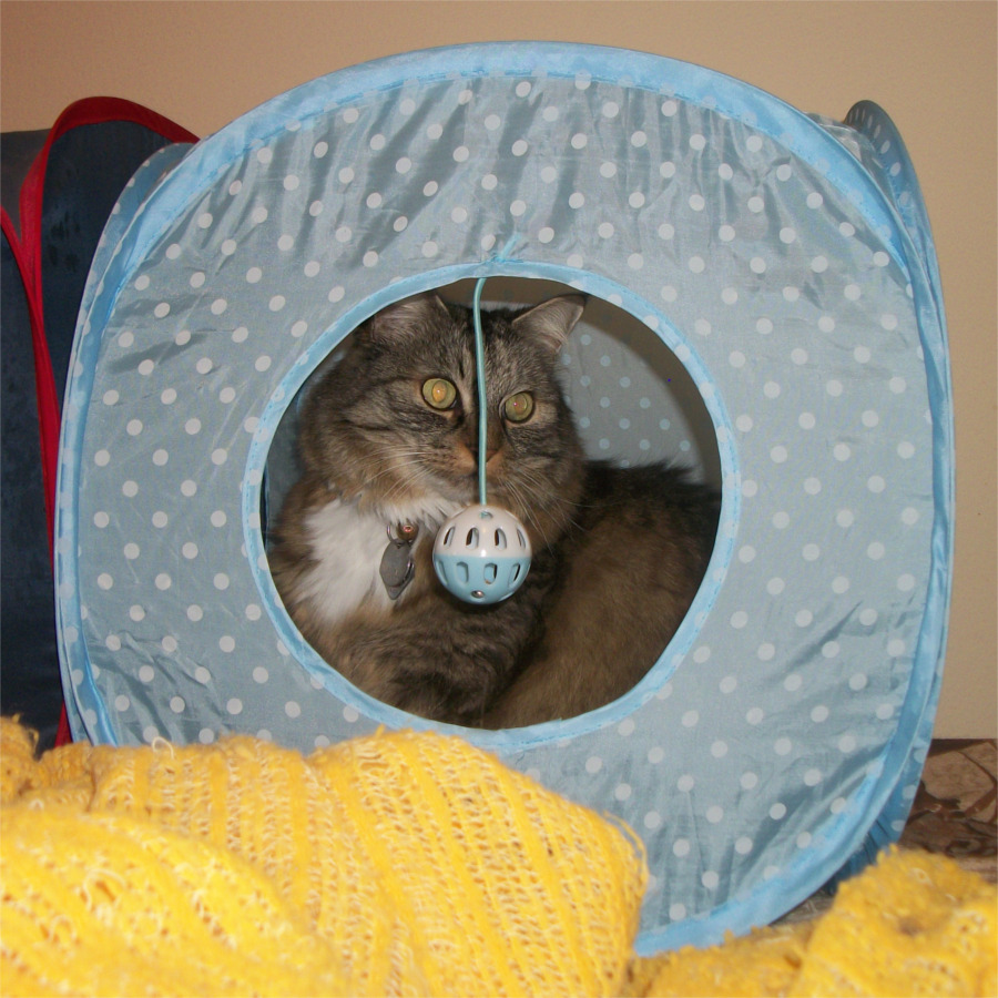 Opoie in blue tent