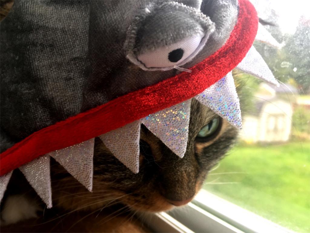 shark opie