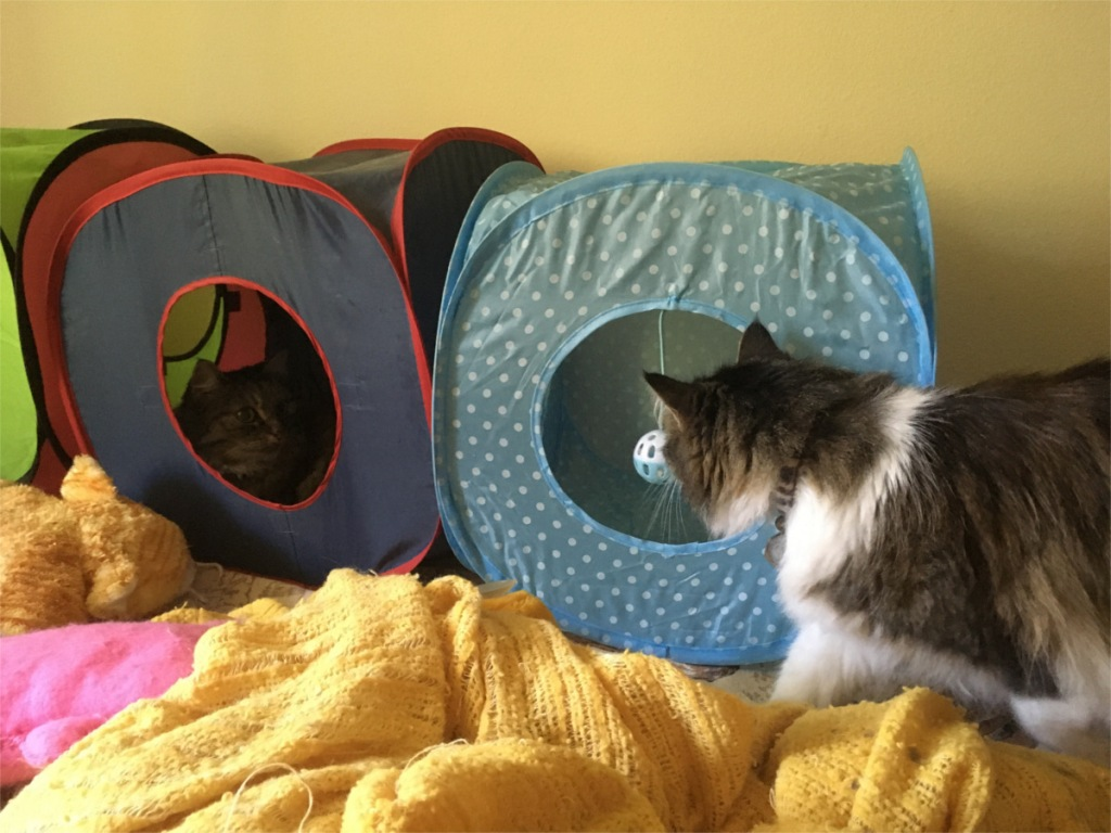 Opie Zeke cat tents