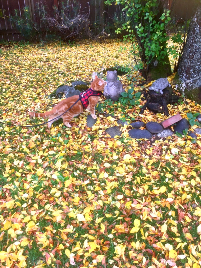 Scooby in the leaves