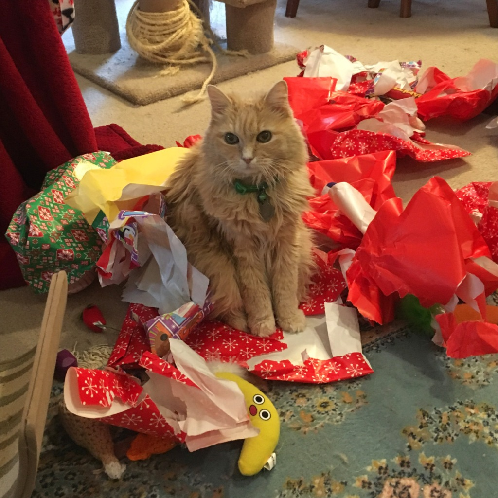 Marigold in Christmas wrapping paper