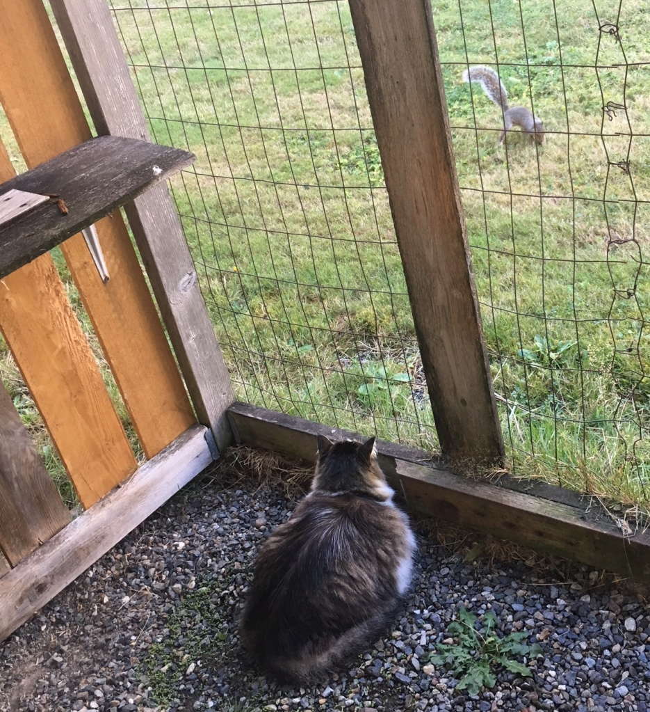 zeke in catio watching squirrel