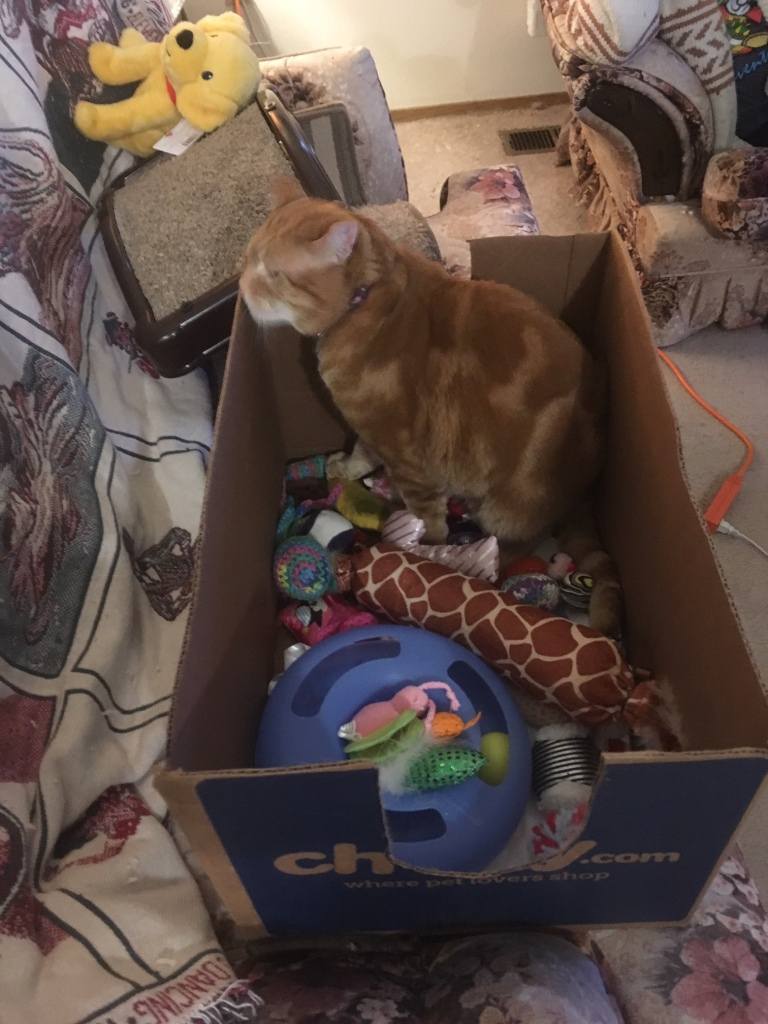 Scooby in box with toys 2