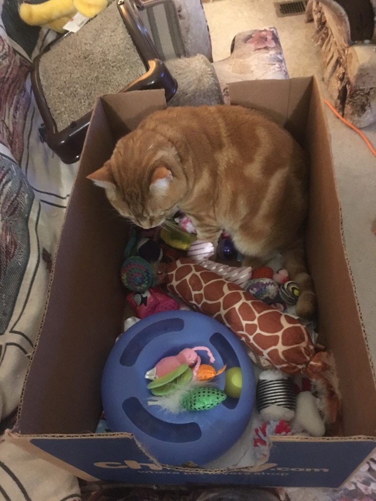 Scooby in box with toys
