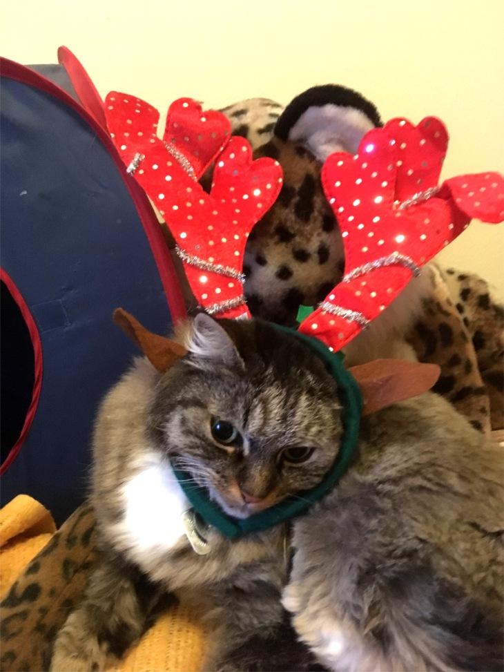 Opie the reindeer