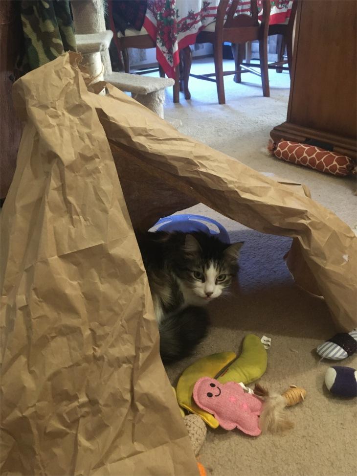 Zeke in paper tent