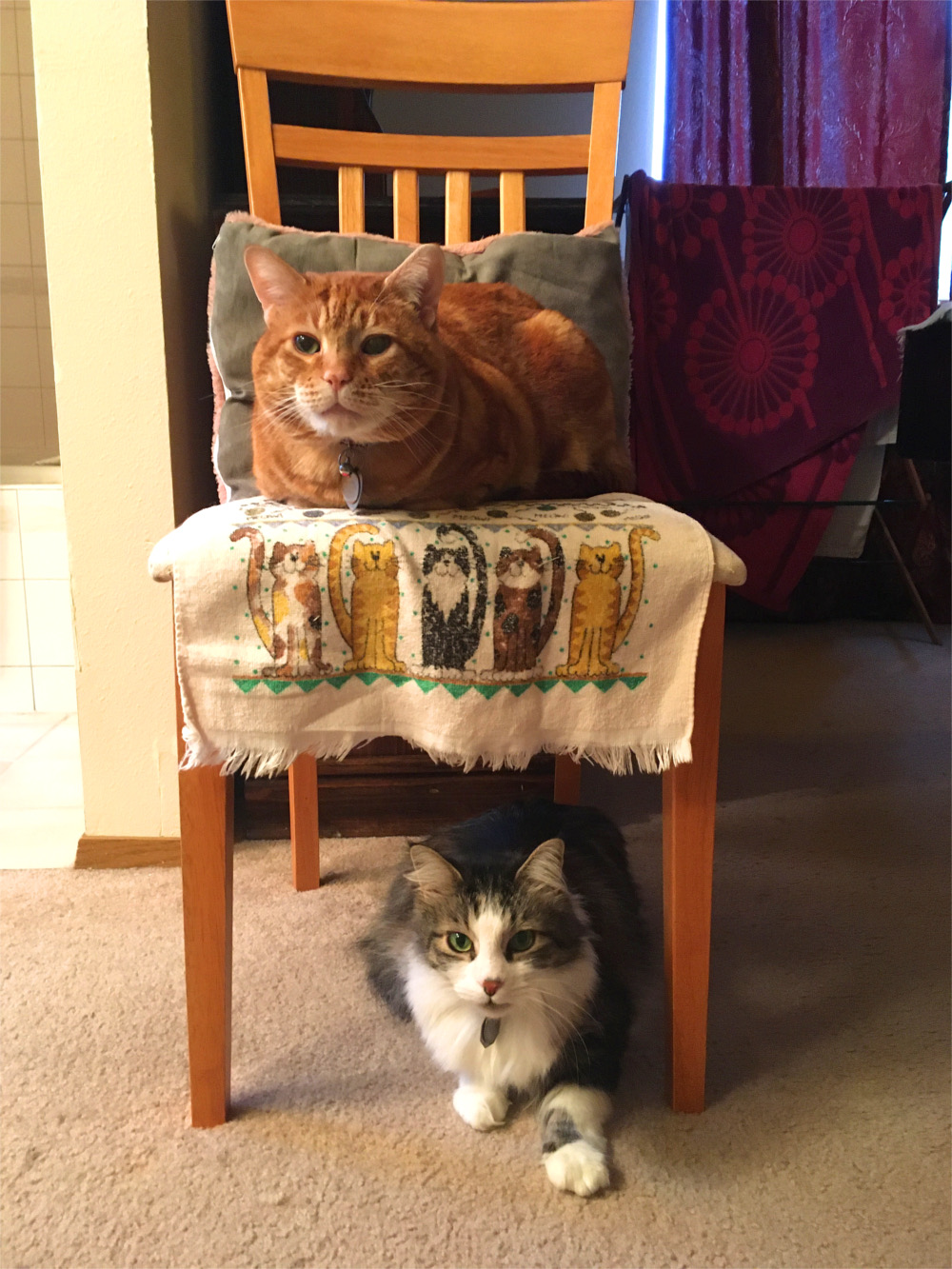 Scooby and Zeke on chair
