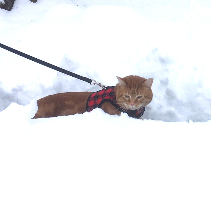 Scooby snow