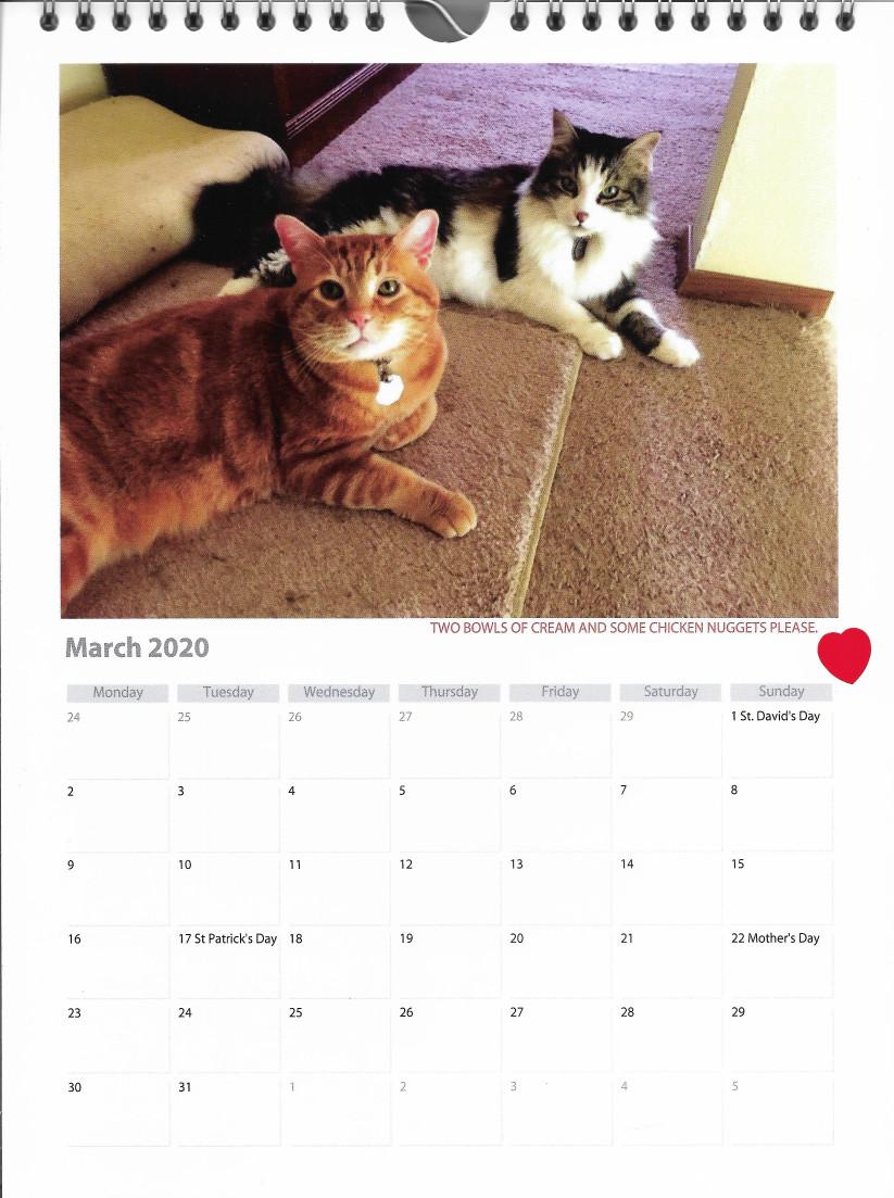2 cats sitting