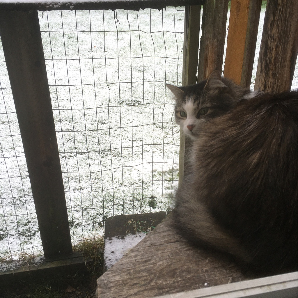Zeke catio snow