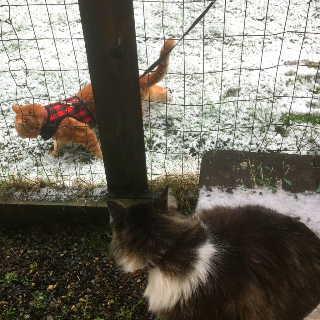 Zeke Scooby catio snow
