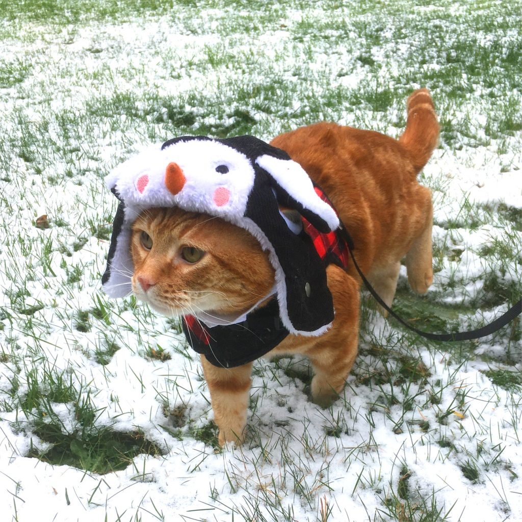 Scooby hat snow cat