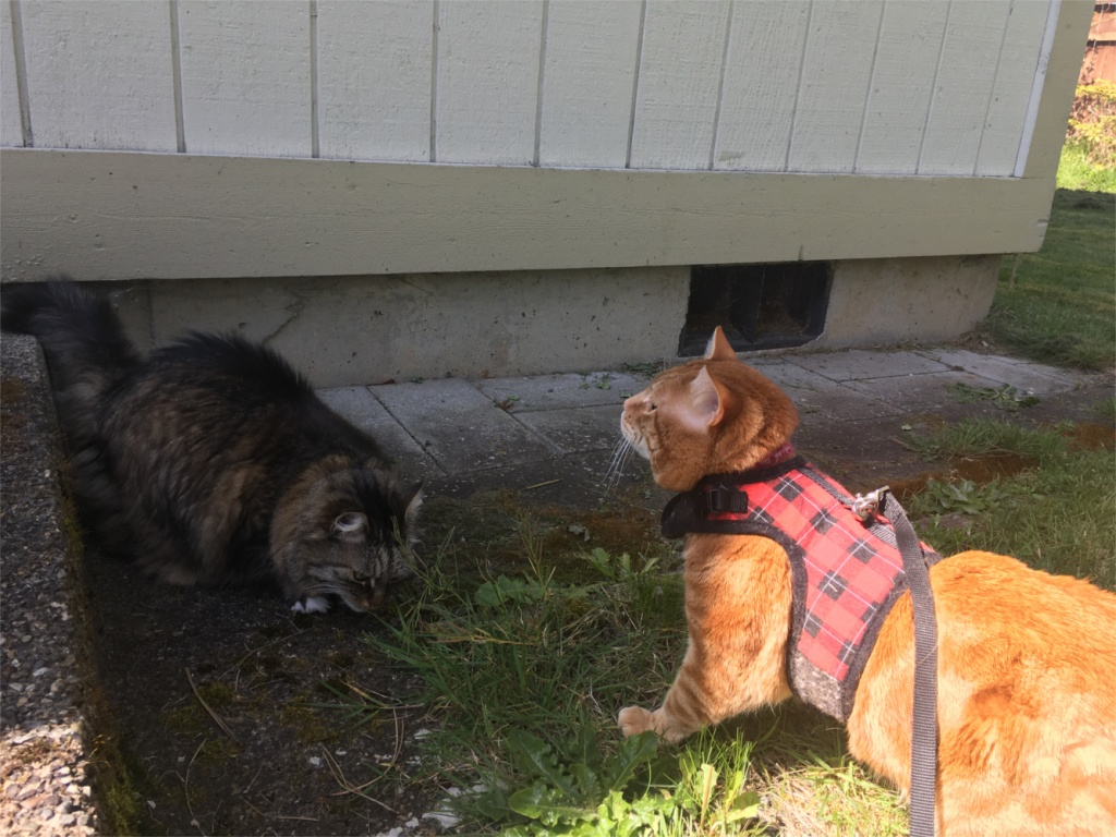 Opie and Scooby outside
