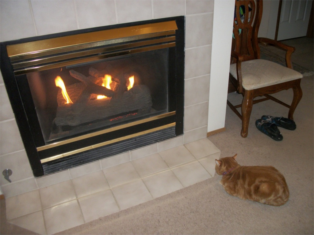 Scooby by fireplace