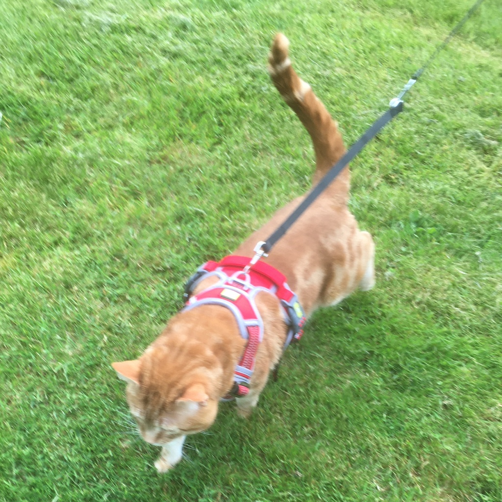 scooby harness