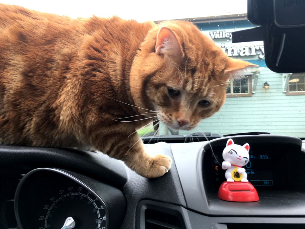 Scooby dashboard