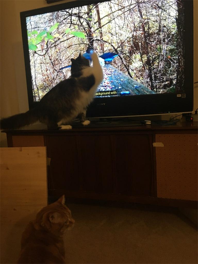Zeke and Scooby watching bird tv