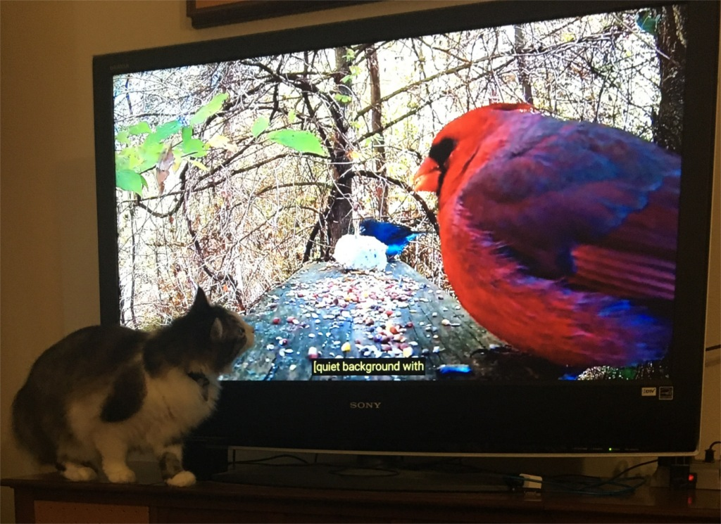 Zeke and red bird on tv