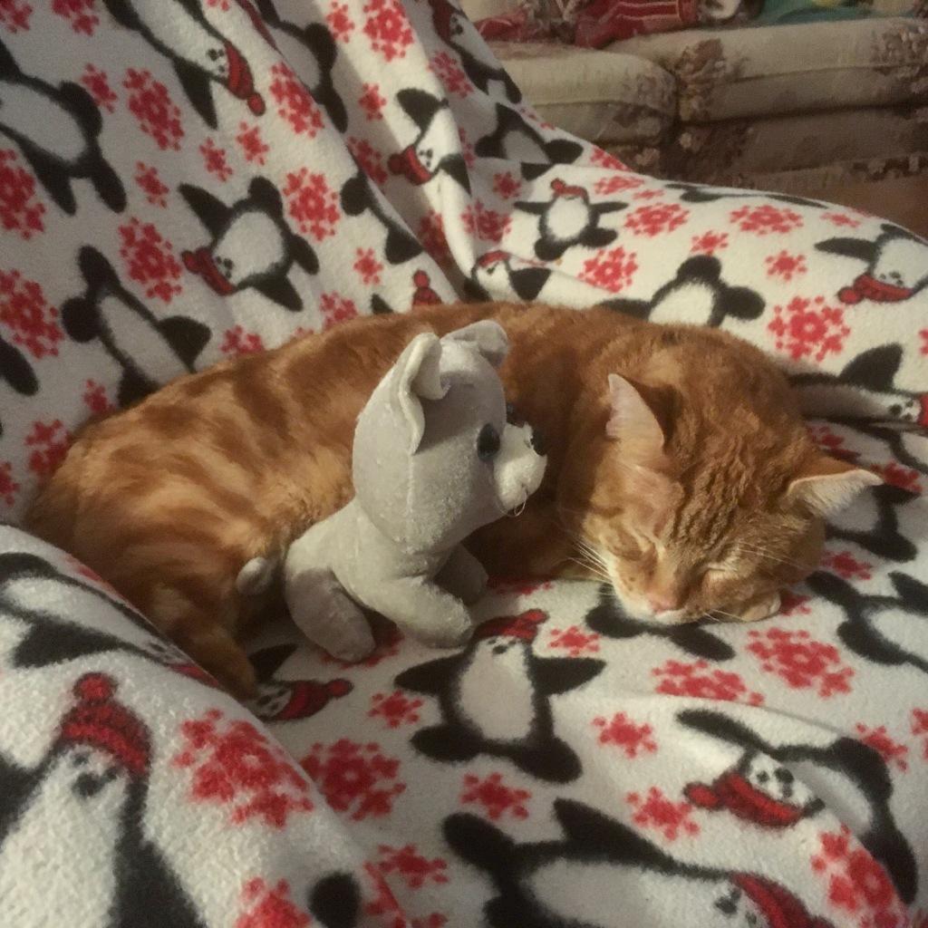 Scooby sleeping