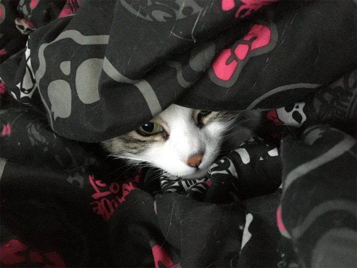 Zeke hiding
