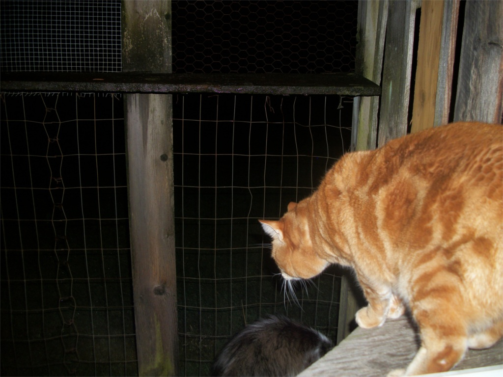 Scooby catio at night