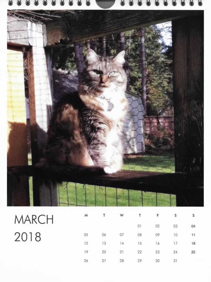 Opie cat in the catio