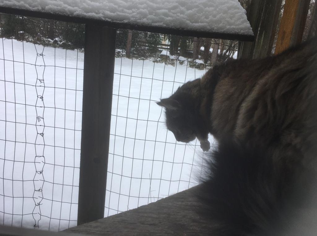 Opie in snowy catio