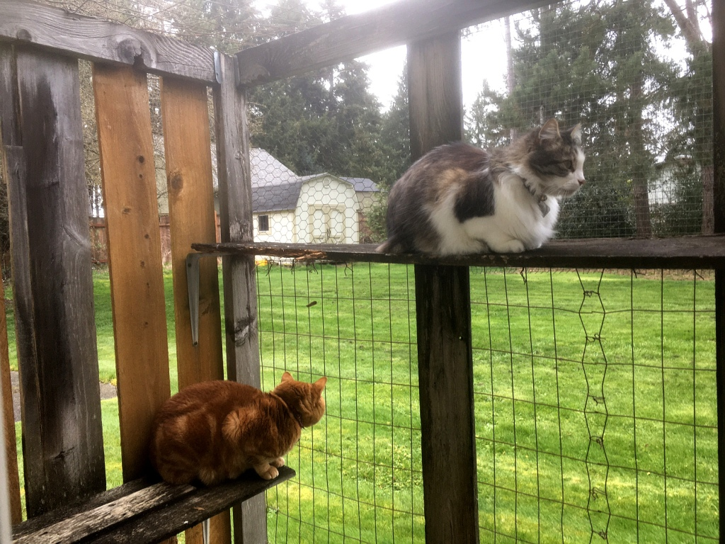 Scooby and Zeke in catio
